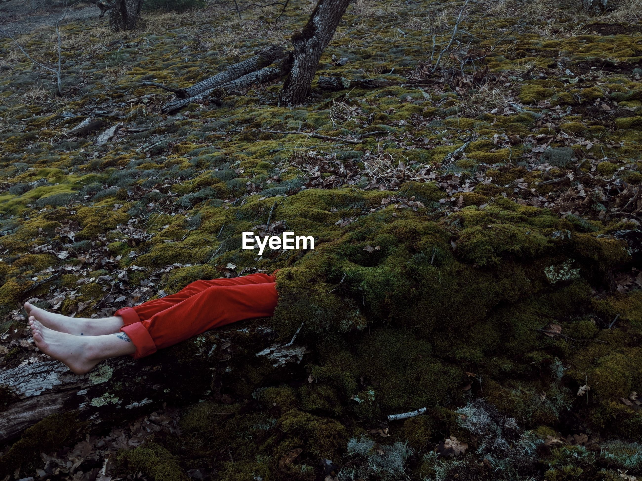 Man covered with moss lying on field