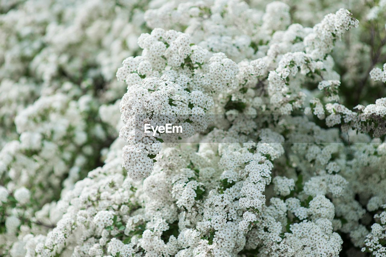 close-up, selective focus, plant, food, no people, food and drink, nature, freshness, green color, full frame, healthy eating, healthcare and medicine, extreme close-up, white color, growth, vegetable, focus on foreground, wellbeing, indoors, day