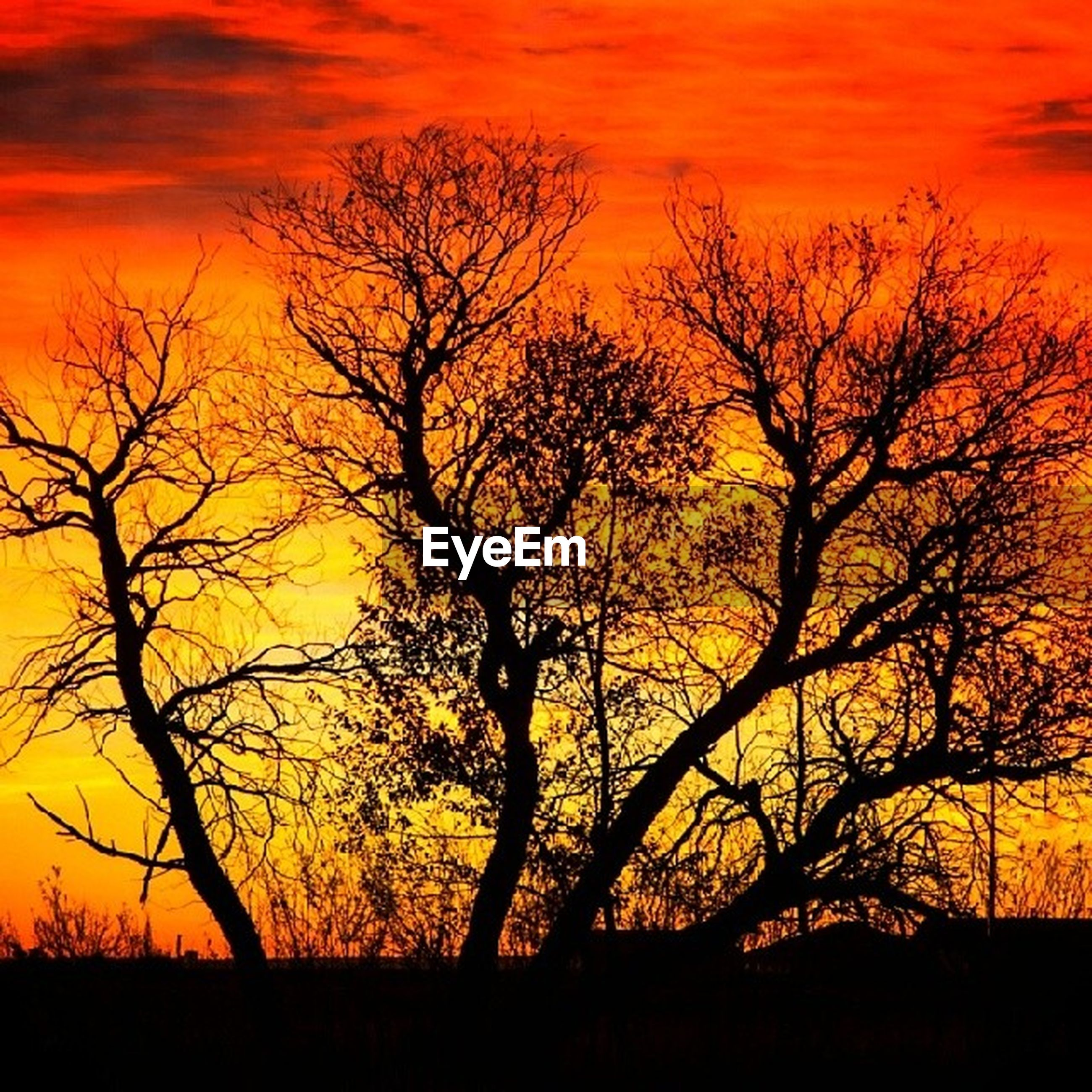 sunset, bare tree, orange color, silhouette, tree, scenics, tranquil scene, tranquility, beauty in nature, branch, sky, nature, idyllic, landscape, dramatic sky, majestic, non-urban scene, outdoors, yellow, no people