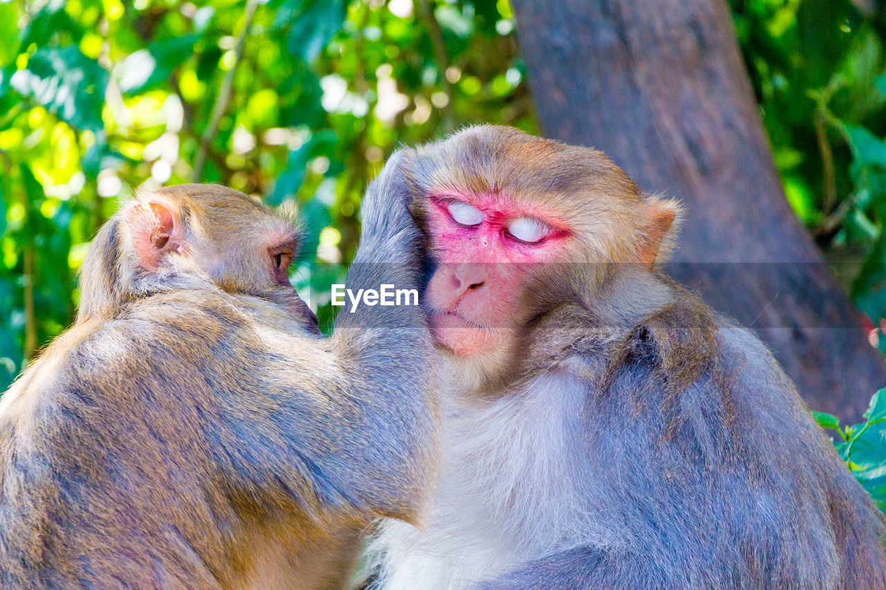 Close-Up Of Monkeys Against Tree