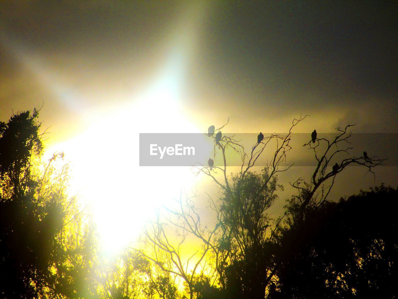 nature, sun, tree, growth, silhouette, beauty in nature, no people, outdoors, sunlight, tranquility, yellow, plant, sky, day