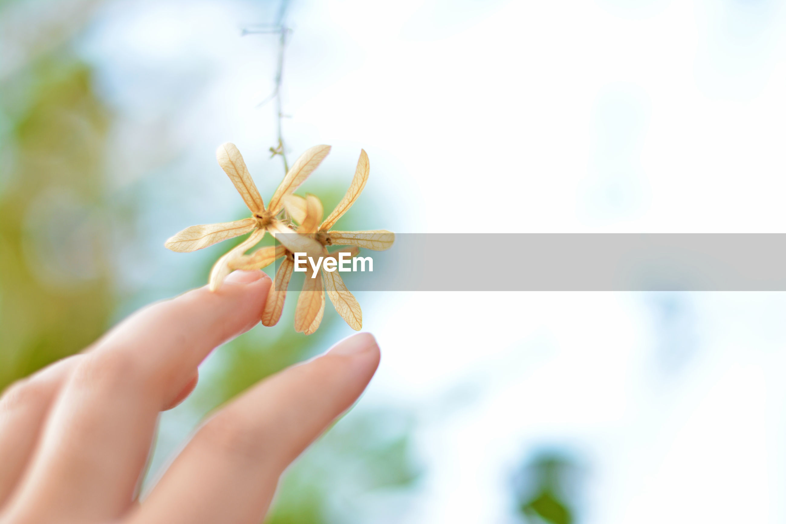 Close-up of hand touching flowers