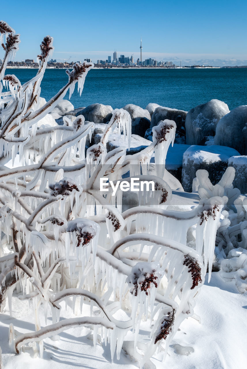water, sea, cold temperature, sky, nature, snow, winter, day, frozen, group of animals, no people, beauty in nature, vertebrate, scenics - nature, ice, animal, white color, animals in the wild
