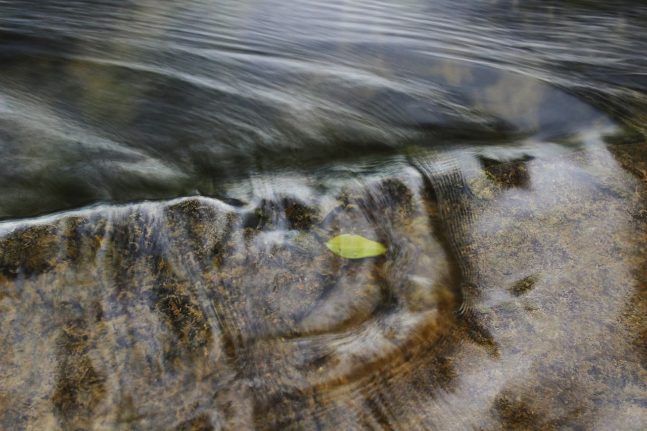 water, motion, nature, no people, blurred motion, day, outdoors, high angle view, full frame, close-up, animal, sea, animal themes, transparent, rock, flowing water, one animal, animals in the wild, flowing