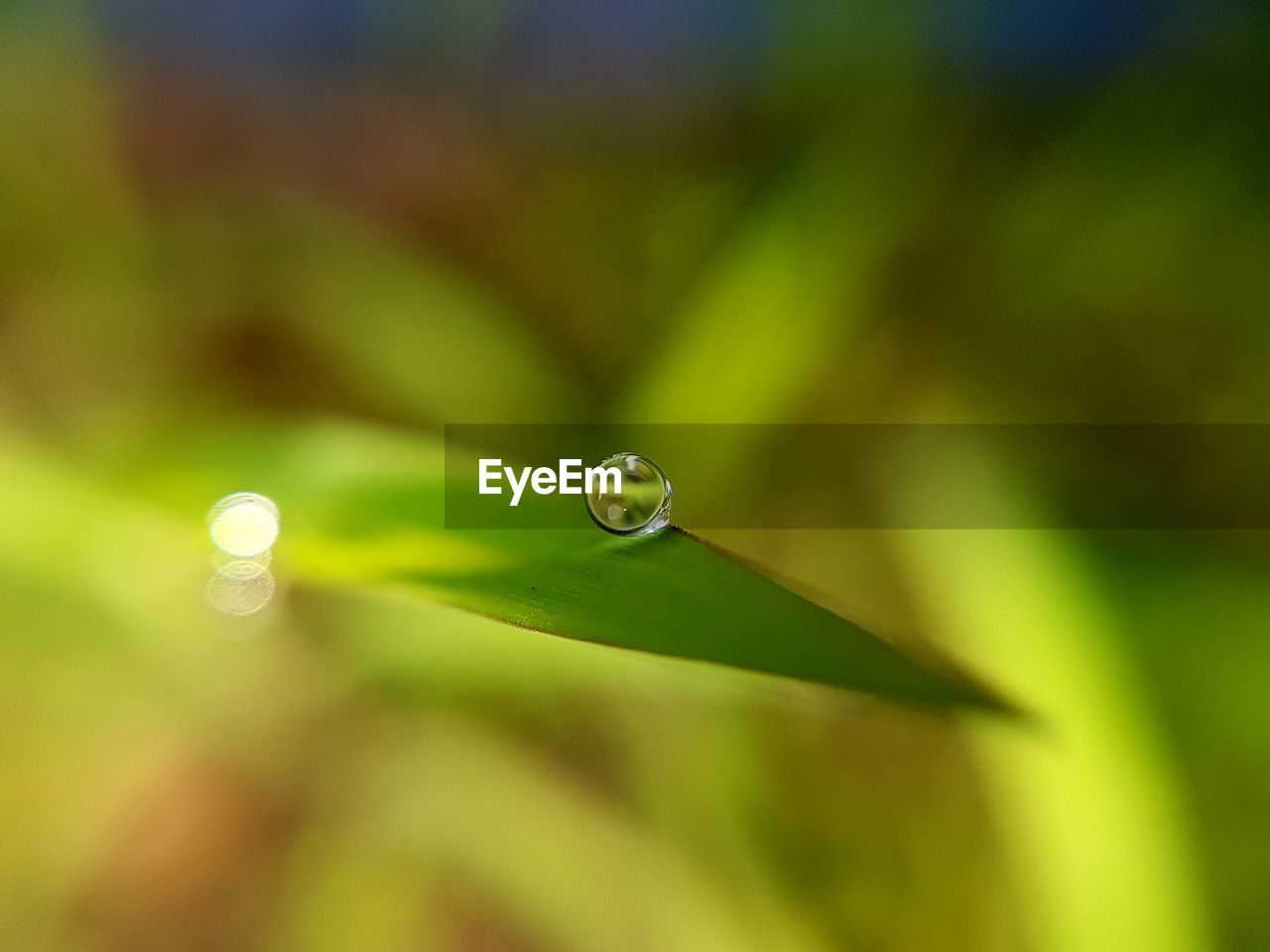 drop, close-up, green color, water, no people, selective focus, growth, plant, beauty in nature, nature, vulnerability, wet, fragility, focus on foreground, freshness, purity, day, plant part, leaf, dew, outdoors, blade of grass, raindrop