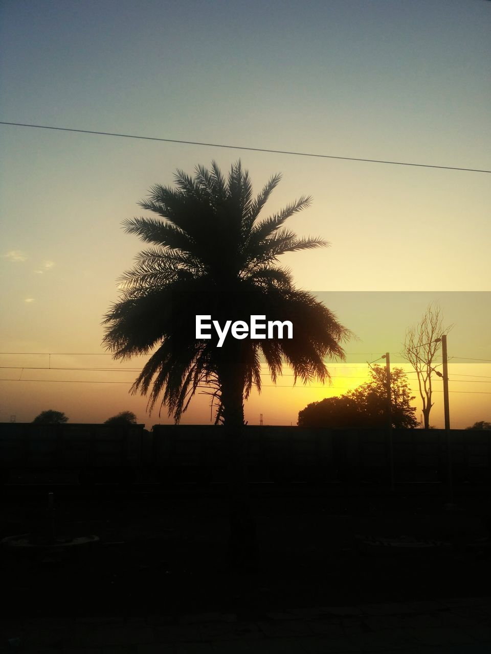 tree, silhouette, palm tree, sunset, tranquil scene, tranquility, no people, scenics, beauty in nature, sky, nature, clear sky, outdoors, growth, day