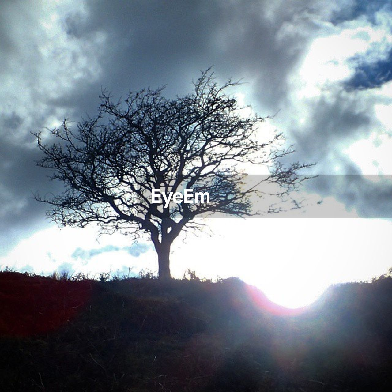 tree, branch, tranquility, majestic, bare tree, lone, beauty in nature, sky, nature, tranquil scene, landscape, isolated, day, outdoors, scenics, no people, tree trunk