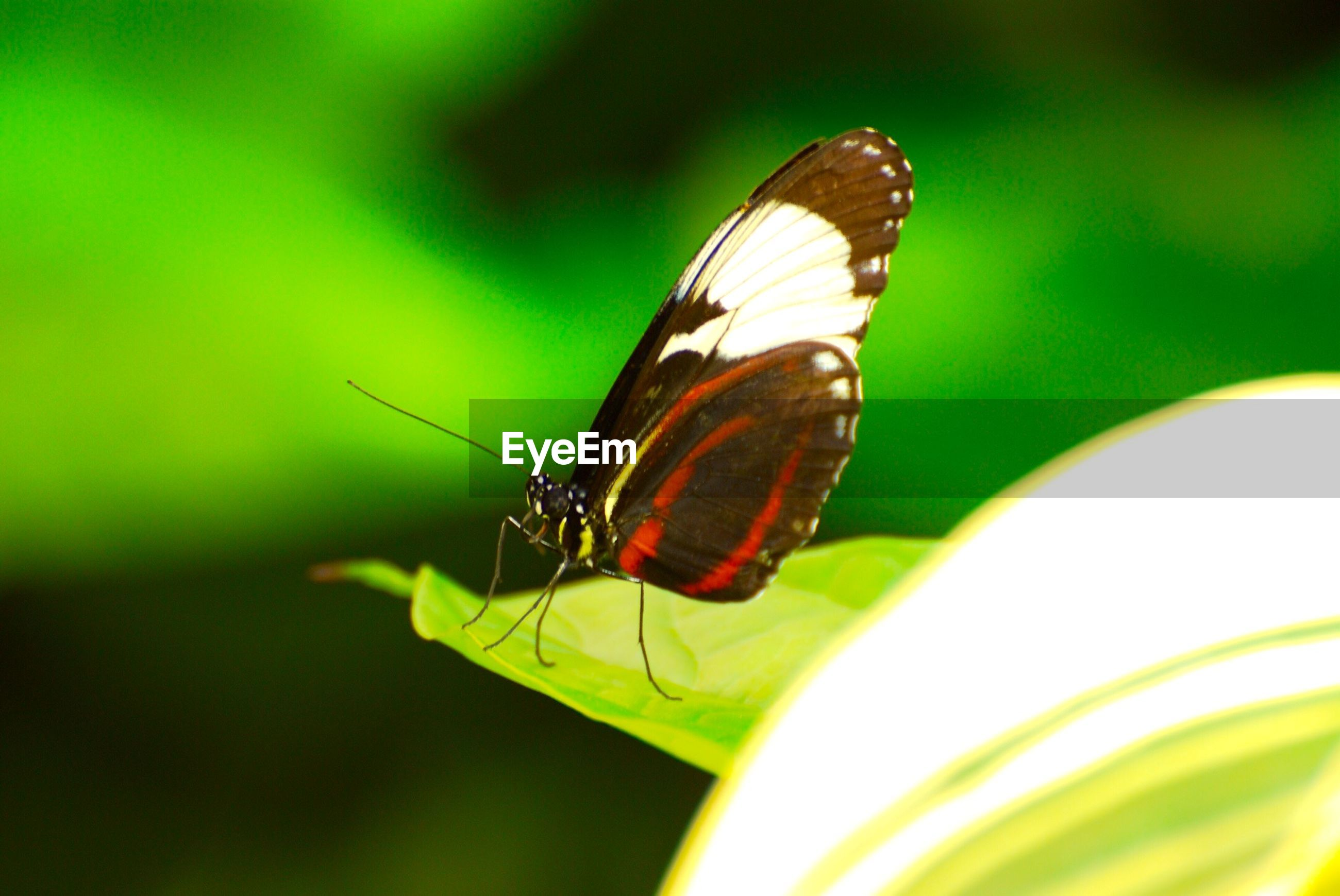 Close-up side view of butterfly on leaf
