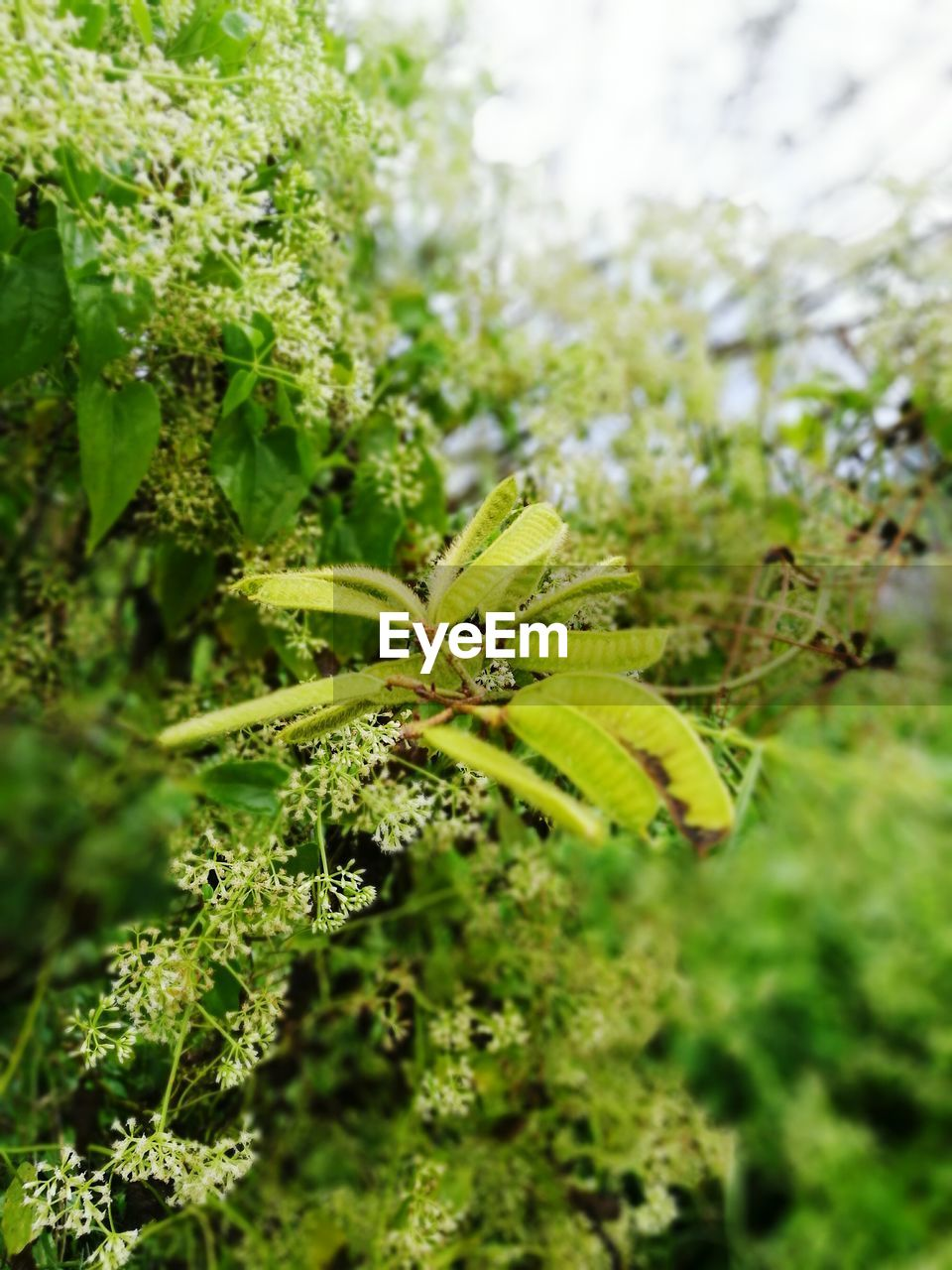 green color, nature, growth, no people, plant, insect, close-up, focus on foreground, outdoors, day, leaf, animals in the wild, beauty in nature, animal themes