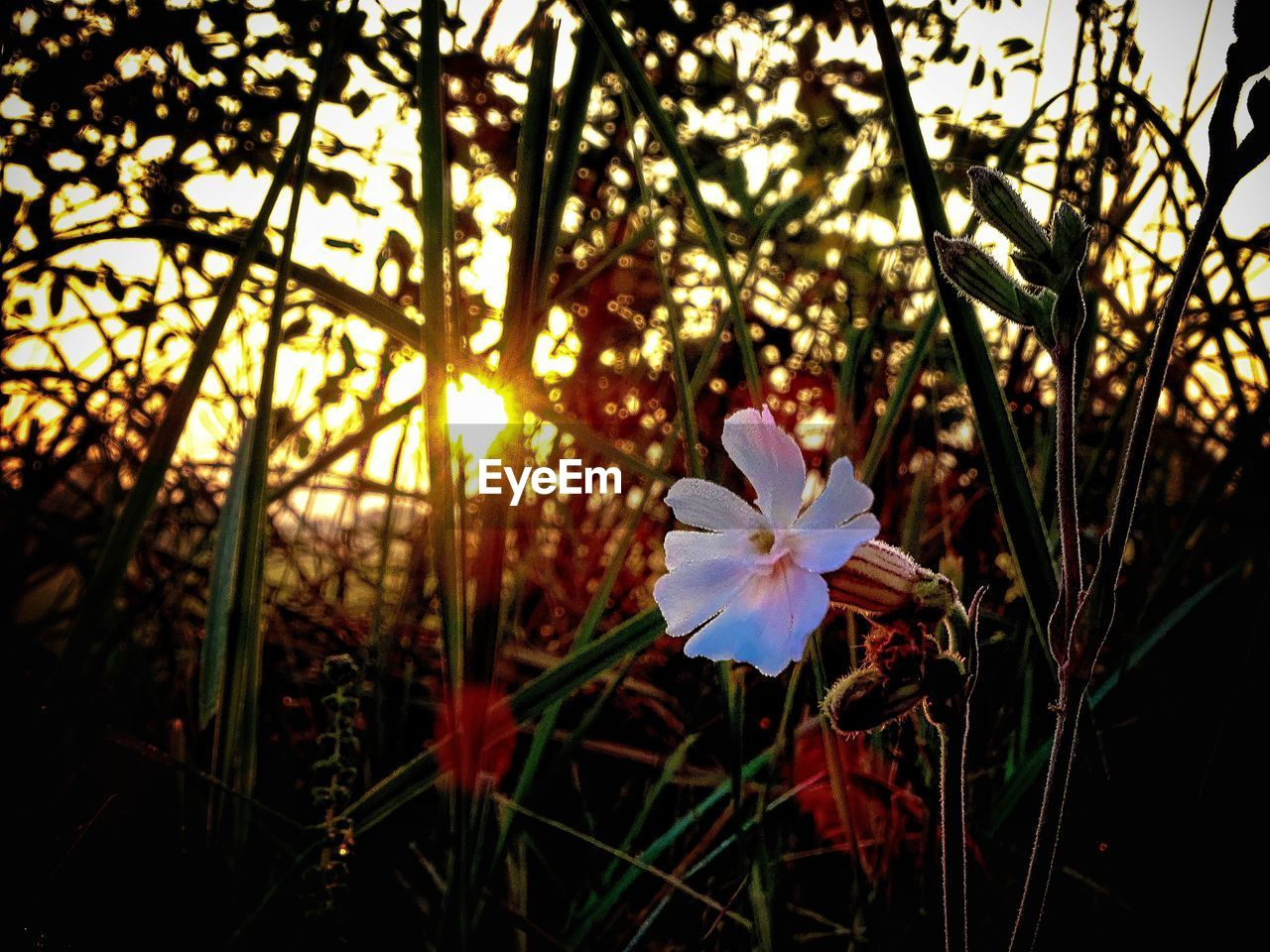 flower, growth, petal, nature, beauty in nature, flower head, focus on foreground, fragility, close-up, blooming, day, no people, plant, freshness, outdoors, periwinkle