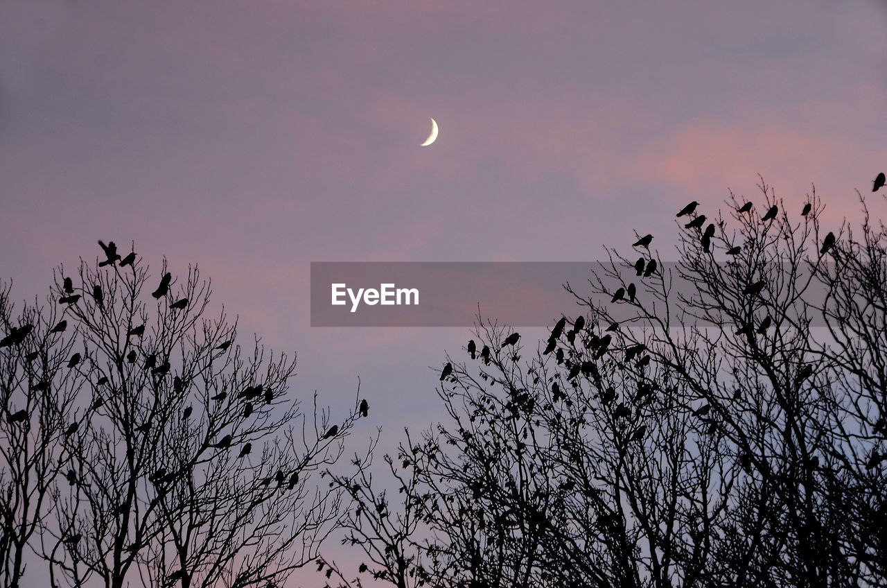 sky, moon, beauty in nature, tree, plant, silhouette, scenics - nature, low angle view, sunset, tranquility, branch, bare tree, nature, tranquil scene, space, no people, astronomy, dusk, crescent, cloud - sky, outdoors, planetary moon