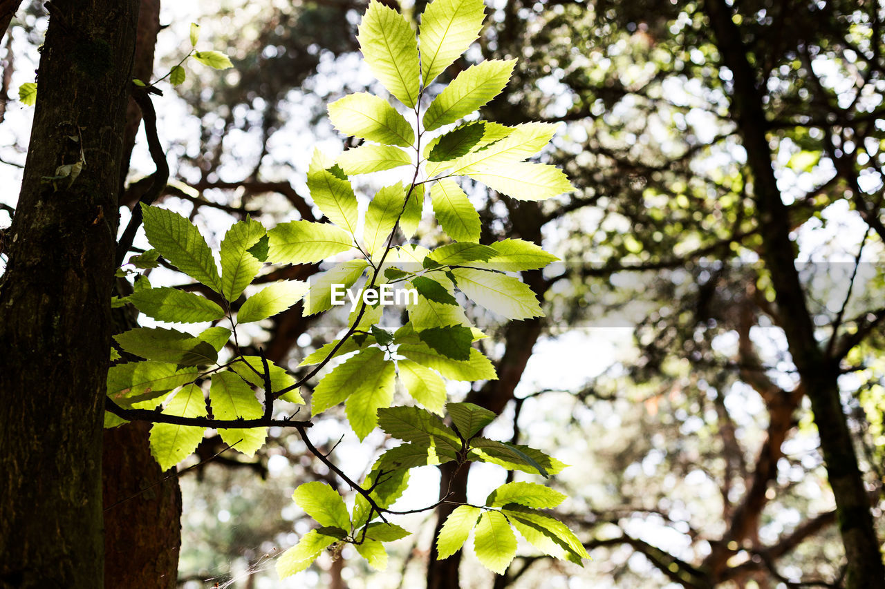 plant, tree, growth, beauty in nature, focus on foreground, nature, leaf, low angle view, flower, branch, day, tree trunk, flowering plant, plant part, close-up, trunk, no people, freshness, outdoors, vulnerability, springtime, spring