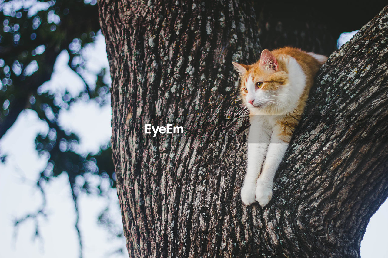 Cat sitting on tree trunk