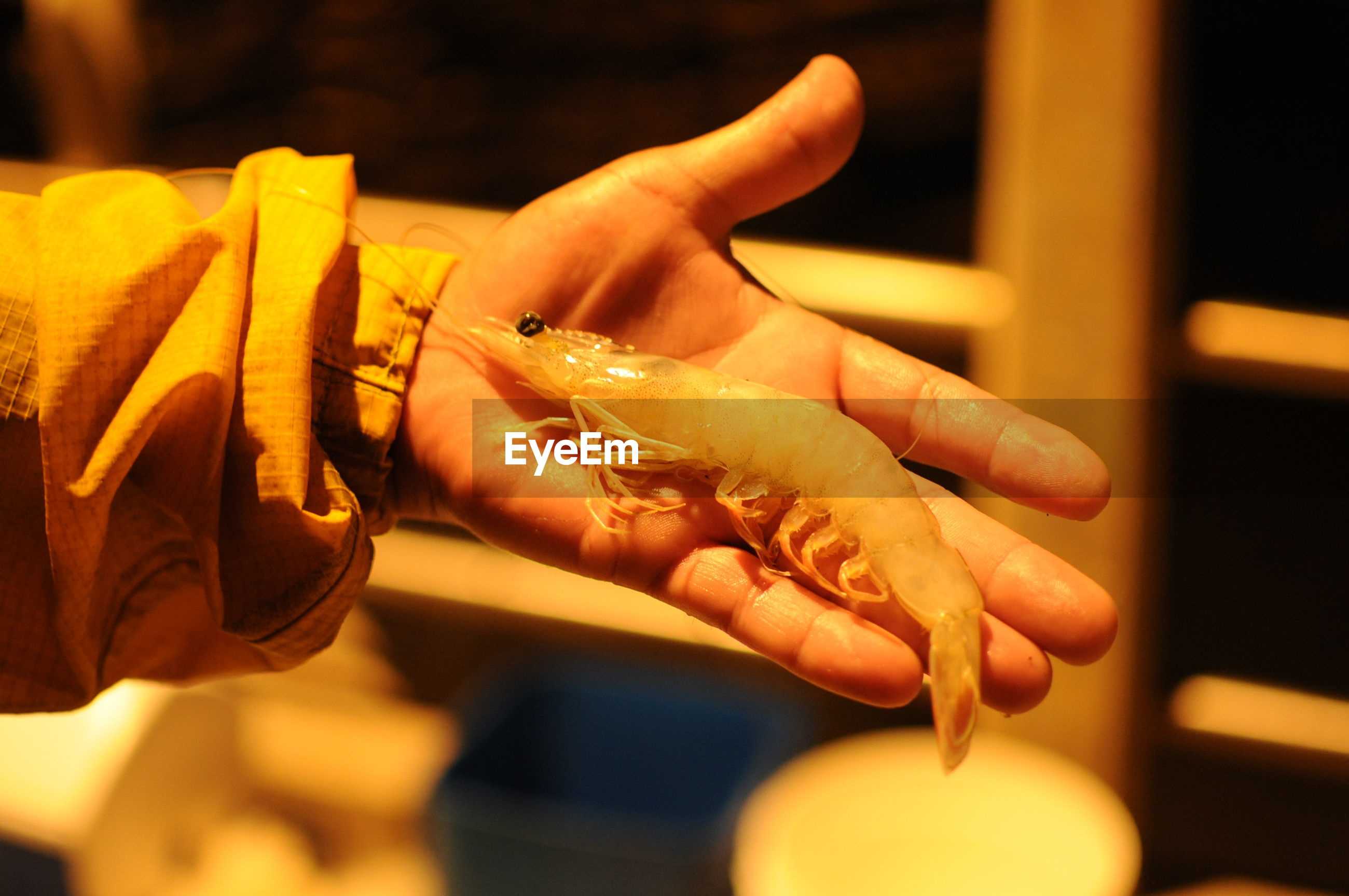 Cropped hand of person holding seafood at night