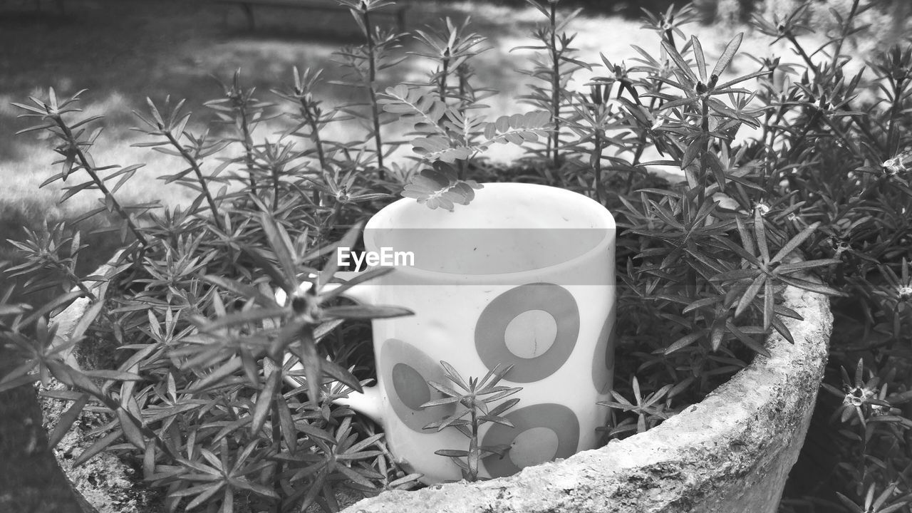 cup, plant, nature, drink, mug, no people, refreshment, growth, close-up, food and drink, day, coffee cup, coffee, freshness, outdoors, grass, field, focus on foreground, front or back yard, coffee - drink, crockery, floral pattern