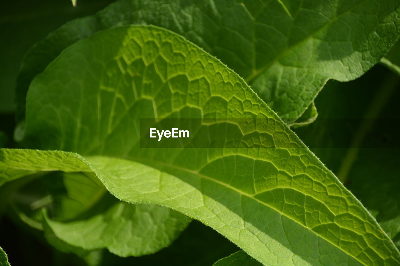 leaf, plant part, green color, plant, growth, close-up, nature, beauty in nature, leaf vein, no people, day, outdoors, freshness, focus on foreground, leaves, vulnerability, fragility, natural pattern, selective focus, full frame, dew