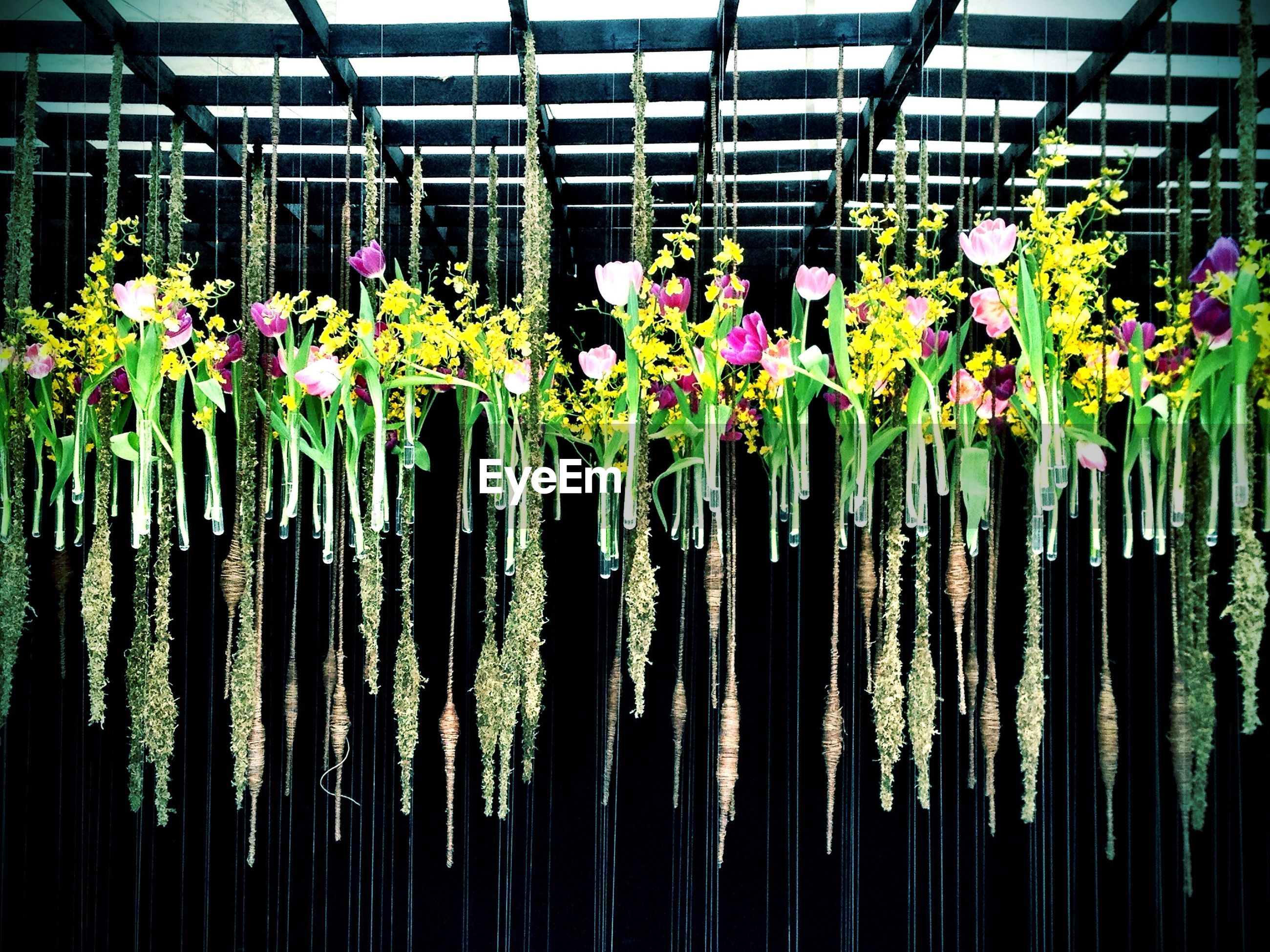 Low angle view of flowers hanging at victoria park
