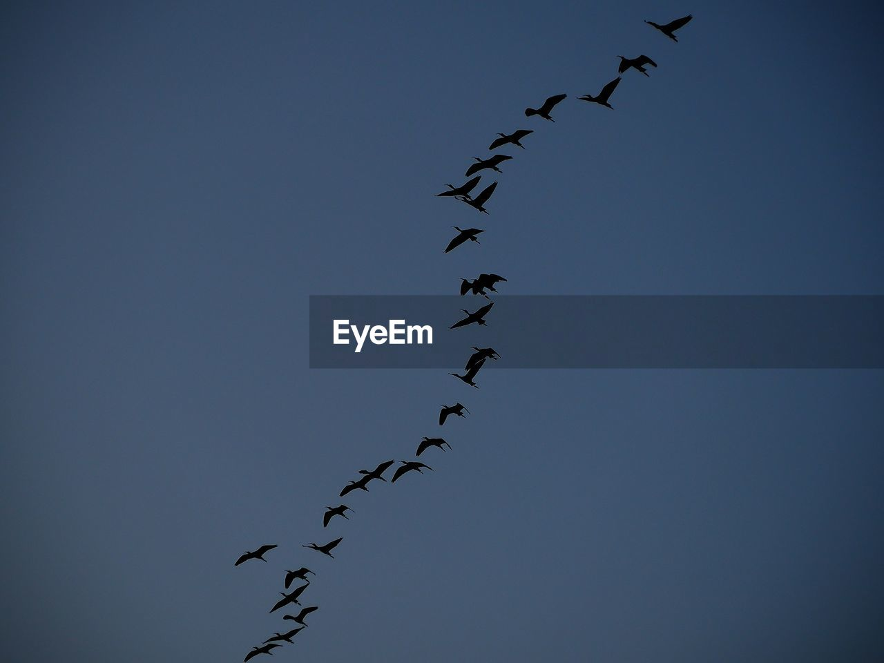 sky, vertebrate, large group of animals, bird, group of animals, low angle view, clear sky, animal, animal themes, flock of birds, animals in the wild, no people, nature, flying, animal wildlife, blue, day, copy space, outdoors, motion