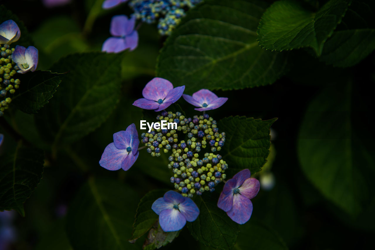 flower, growth, beauty in nature, leaf, freshness, petal, nature, fragility, green color, plant, flower head, day, no people, outdoors, blooming, periwinkle, close-up