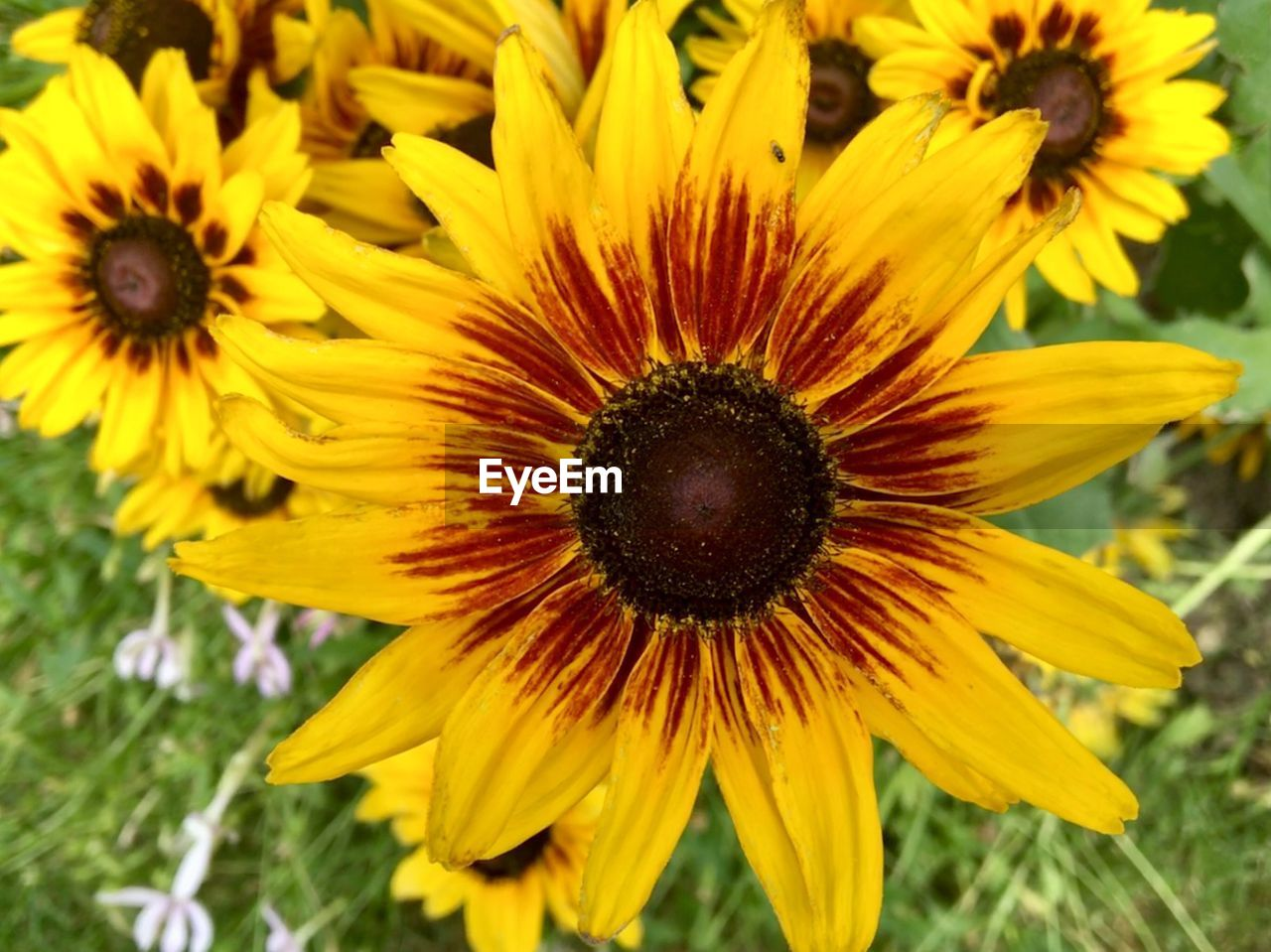 flower, flowering plant, yellow, fragility, flower head, vulnerability, petal, freshness, growth, inflorescence, plant, beauty in nature, close-up, pollen, focus on foreground, coneflower, nature, no people, black-eyed susan, day, sunflower, gazania