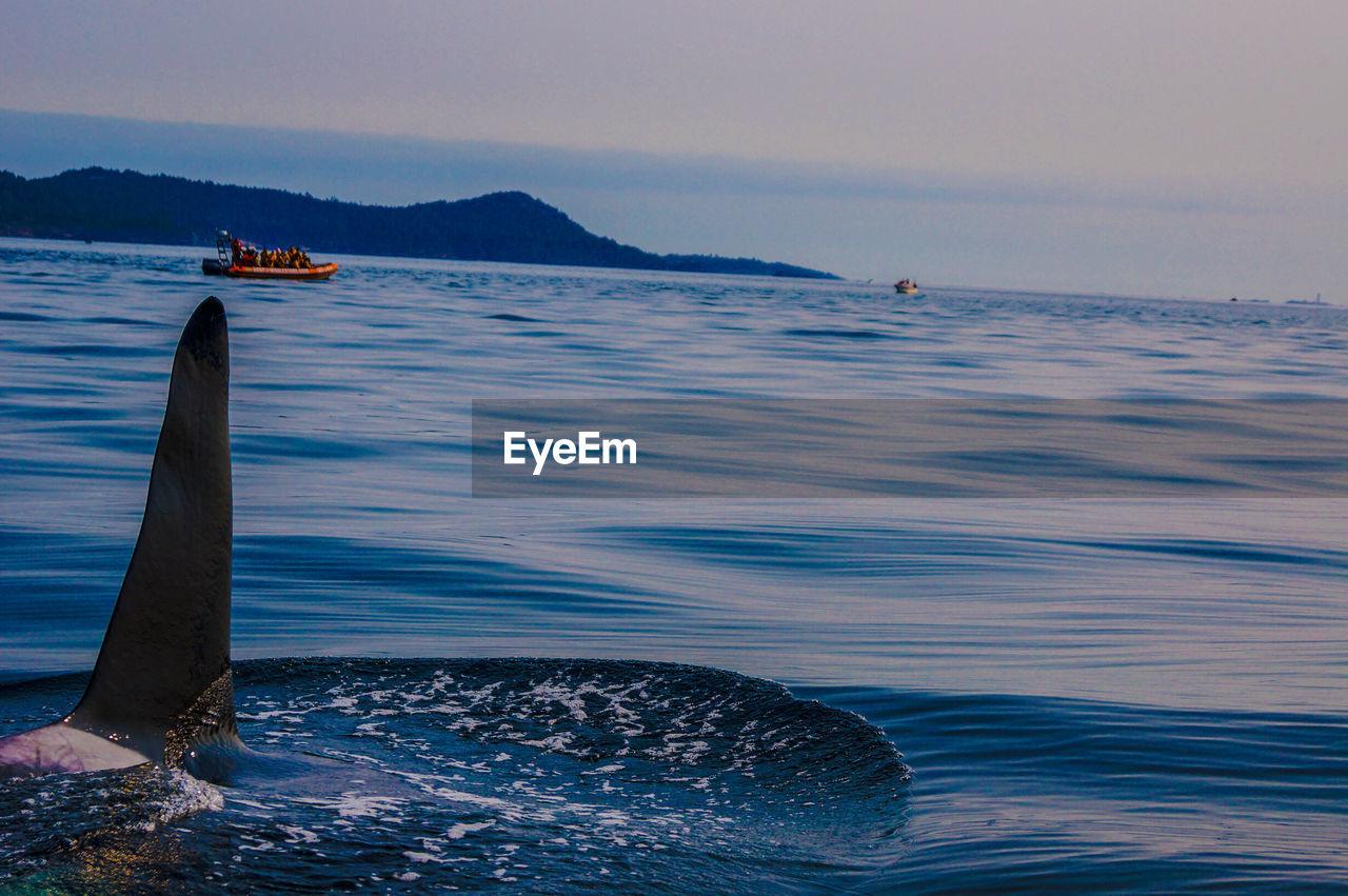 Whale at calm sea