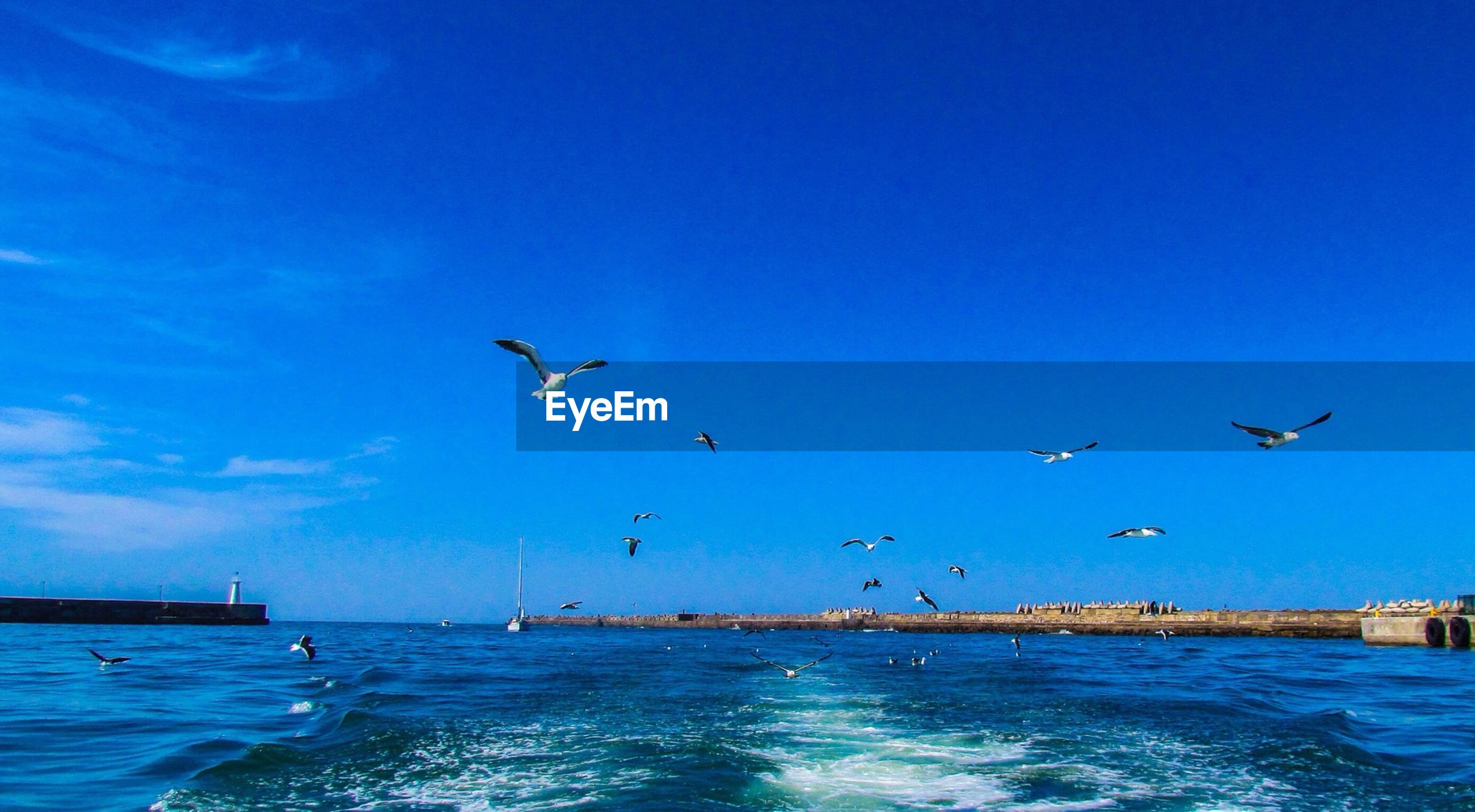 bird, animal themes, flying, animals in the wild, wildlife, water, sea, seagull, spread wings, blue, mid-air, sky, nature, horizon over water, waterfront, beauty in nature, medium group of animals, flock of birds, scenics