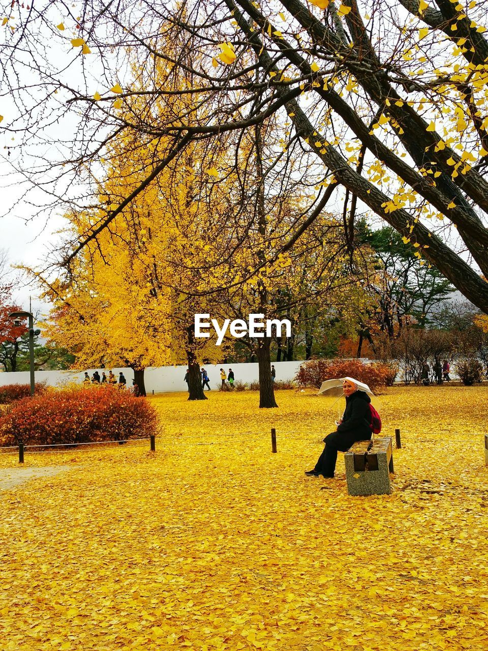Side view of woman sitting on bench in park during autumn
