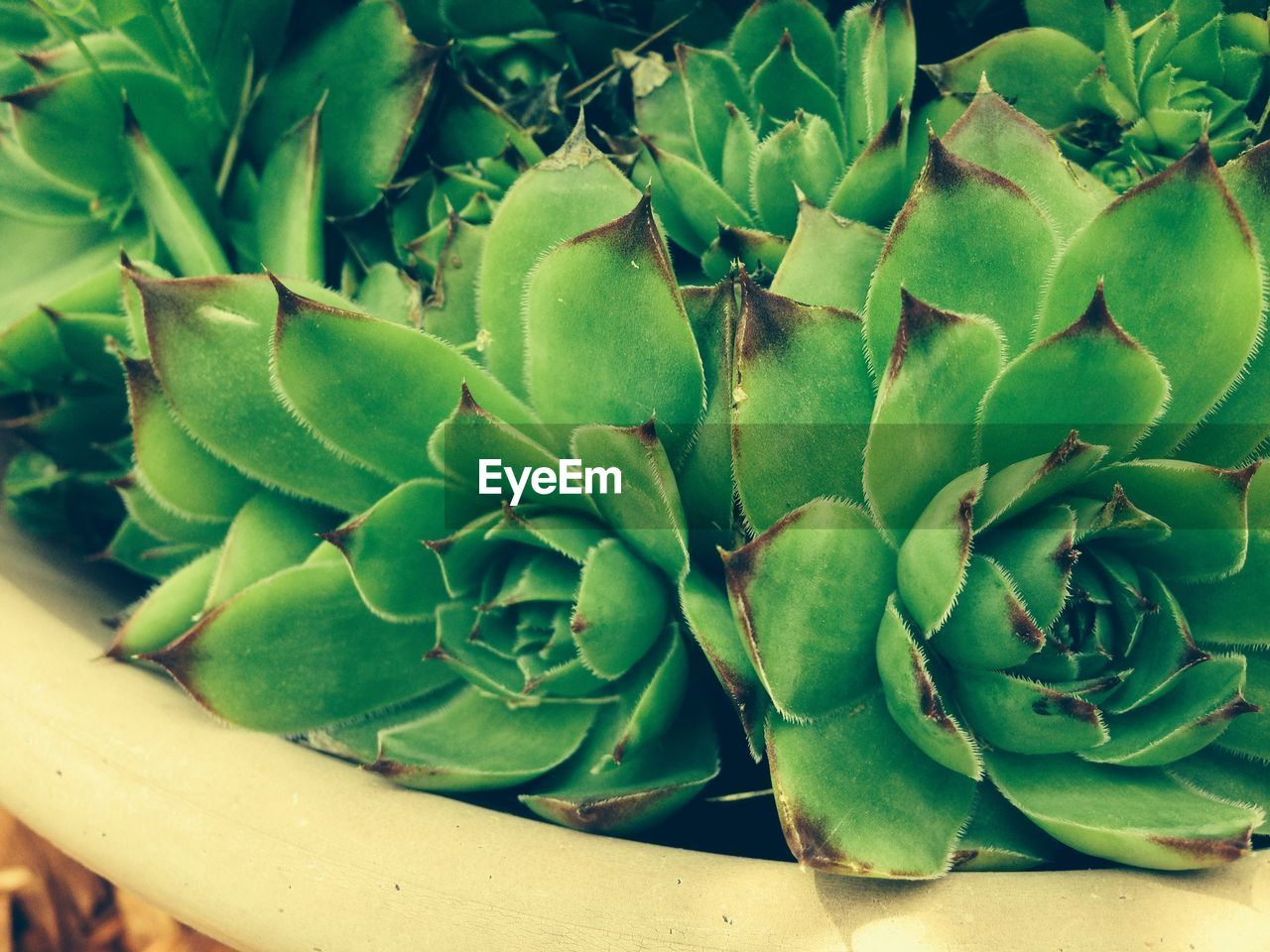 Close-Up Of Potted Succulent Plants