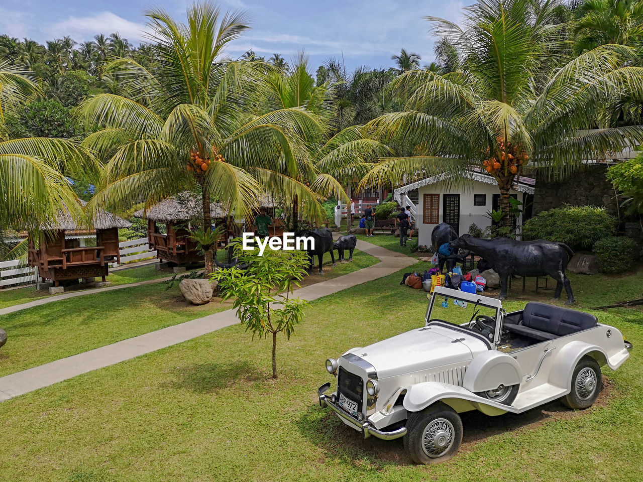 palm tree, plant, tree, tropical climate, mode of transportation, transportation, grass, nature, land vehicle, day, motor vehicle, green color, car, leisure activity, incidental people, land, growth, sunlight, real people, golf cart