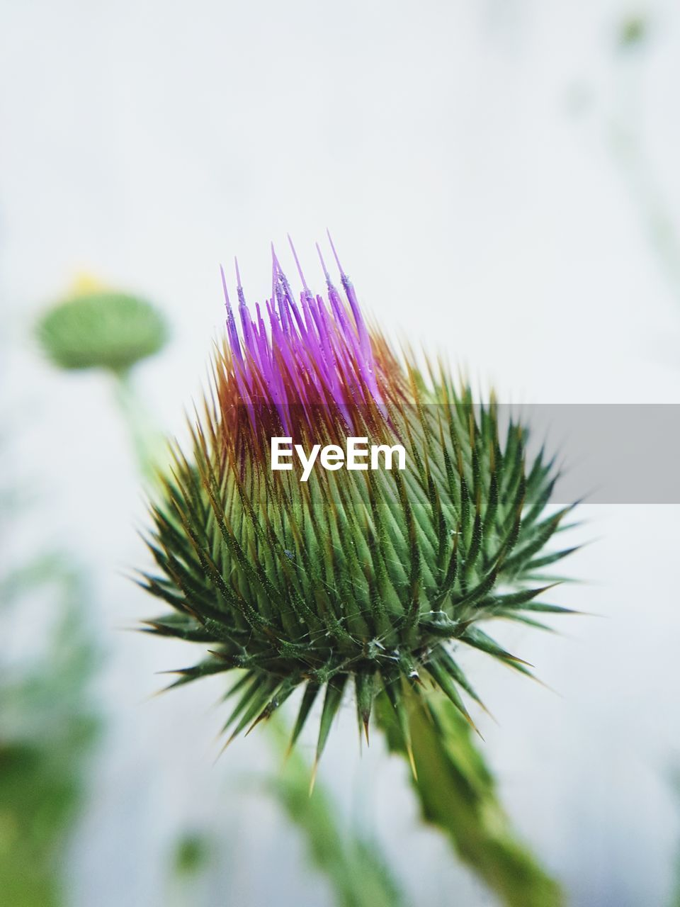 nature, close-up, focus on foreground, flower, purple, fragility, green color, no people, growth, beauty in nature, plant, day, thistle, freshness, outdoors, flower head, sky, passion flower