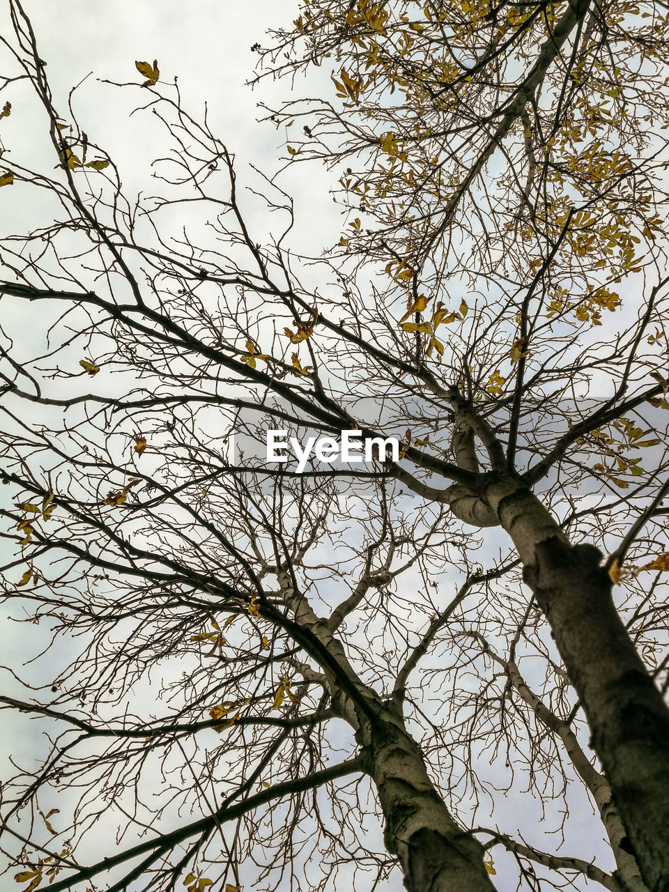 tree, low angle view, branch, plant, sky, no people, bare tree, nature, tree trunk, day, trunk, tranquility, growth, beauty in nature, outdoors, scenics - nature, clear sky, non-urban scene, tall - high, tree canopy