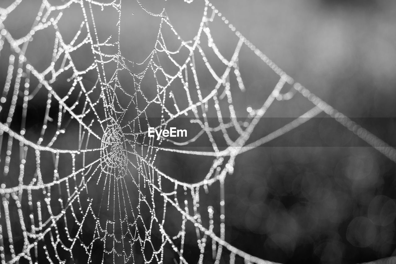 spider web, fragility, focus on foreground, vulnerability, close-up, no people, drop, pattern, nature, natural pattern, intricacy, water, day, spider, complexity, wet, outdoors, beauty in nature, selective focus, web, dew, raindrop