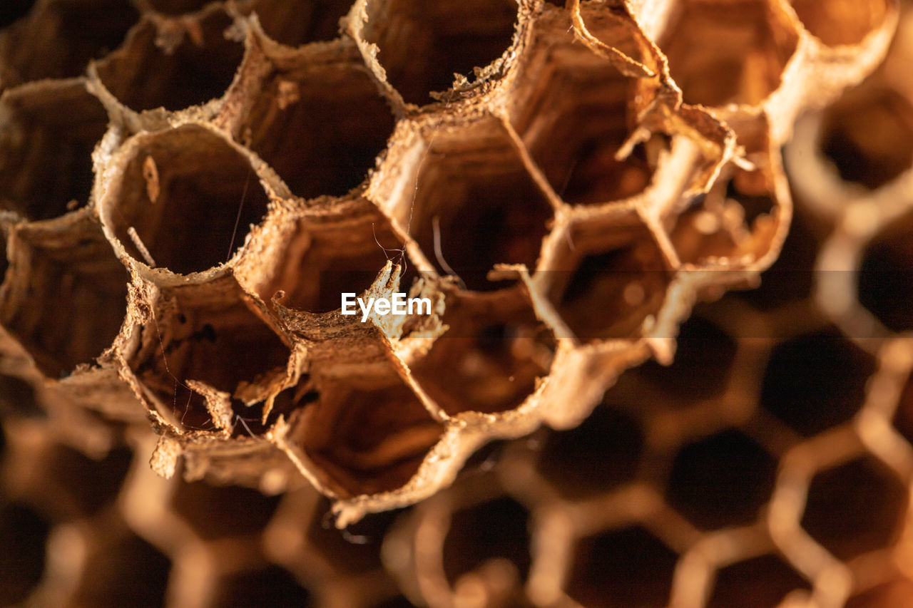 honeycomb, close-up, pattern, no people, focus on foreground, full frame, selective focus, hexagon, natural pattern, nature, backgrounds, invertebrate, brown, insect, outdoors, dry, day, shape, apiculture, beehive