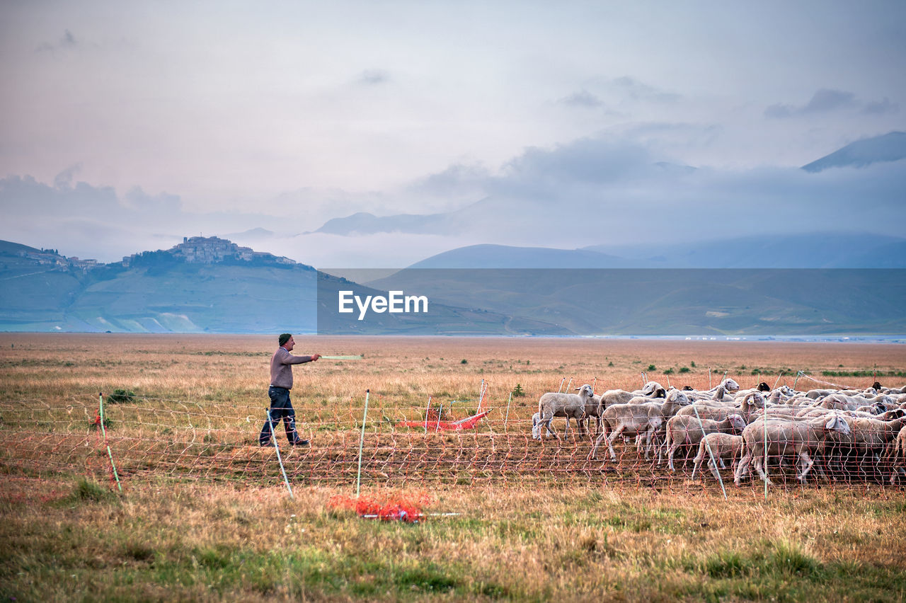 Shepherd Walking With Sheep On Field Against Mountains