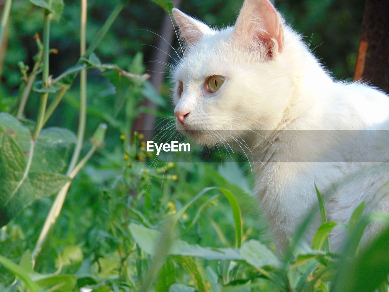 animal themes, animal, mammal, one animal, pets, domestic, domestic animals, domestic cat, vertebrate, cat, feline, plant, whisker, close-up, plant part, looking, leaf, no people, looking away, nature, animal head, outdoors, profile view