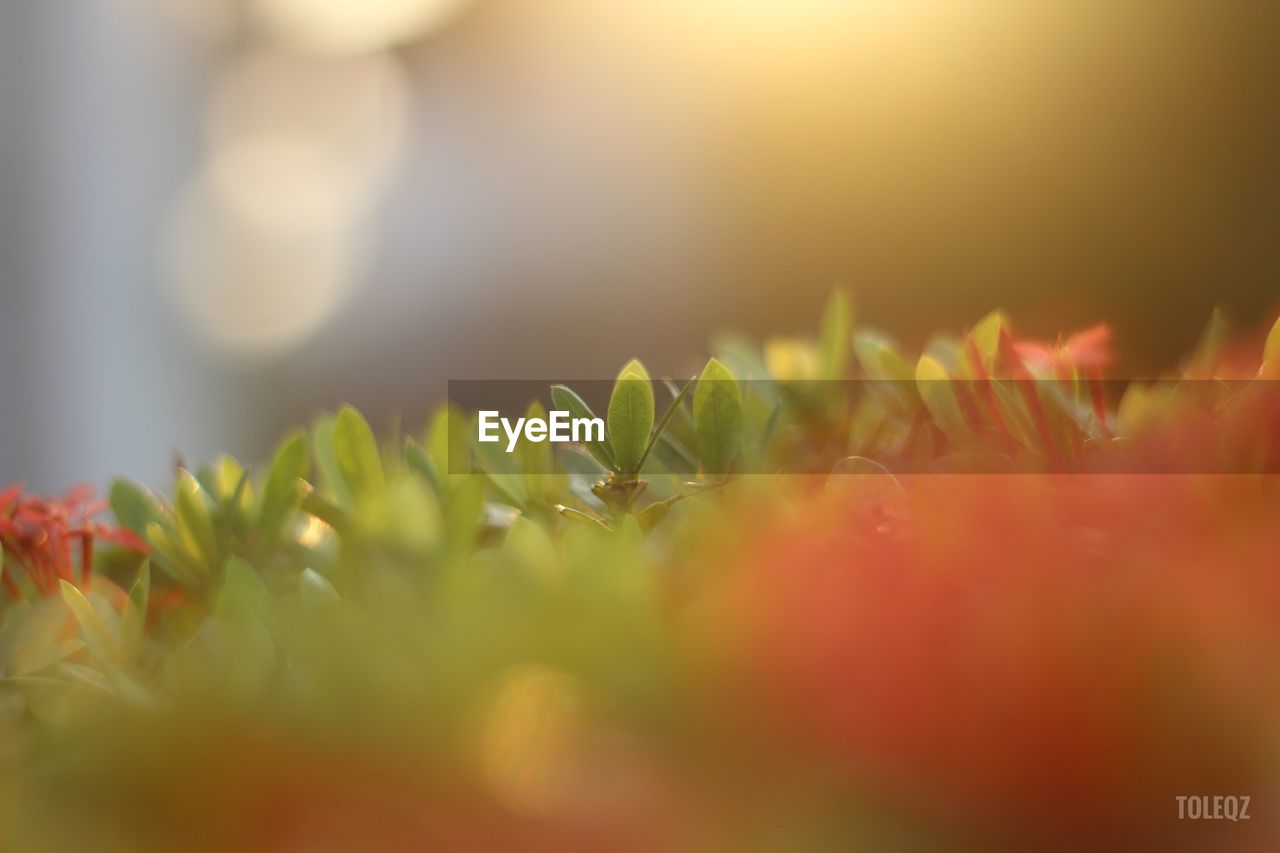 growth, nature, selective focus, green color, beauty in nature, close-up, plant, freshness, no people, fragility, flower, outdoors, day