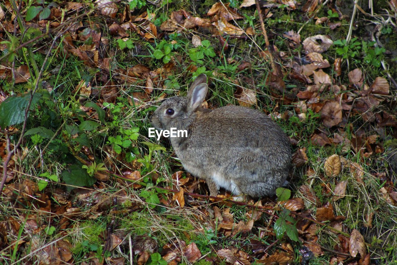 Side View Of Rabbit In Forest