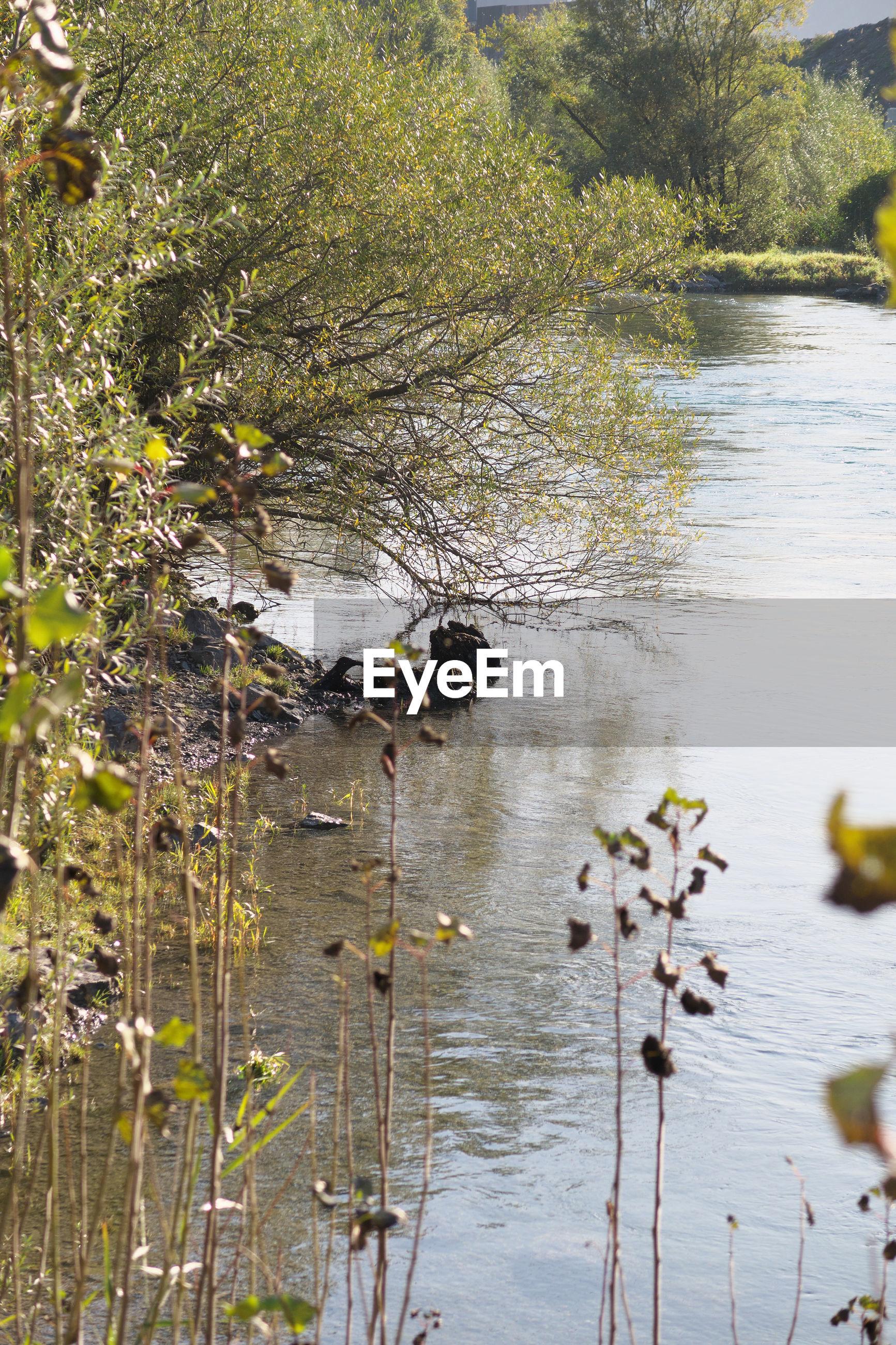 VIEW OF DUCKS ON LAKE