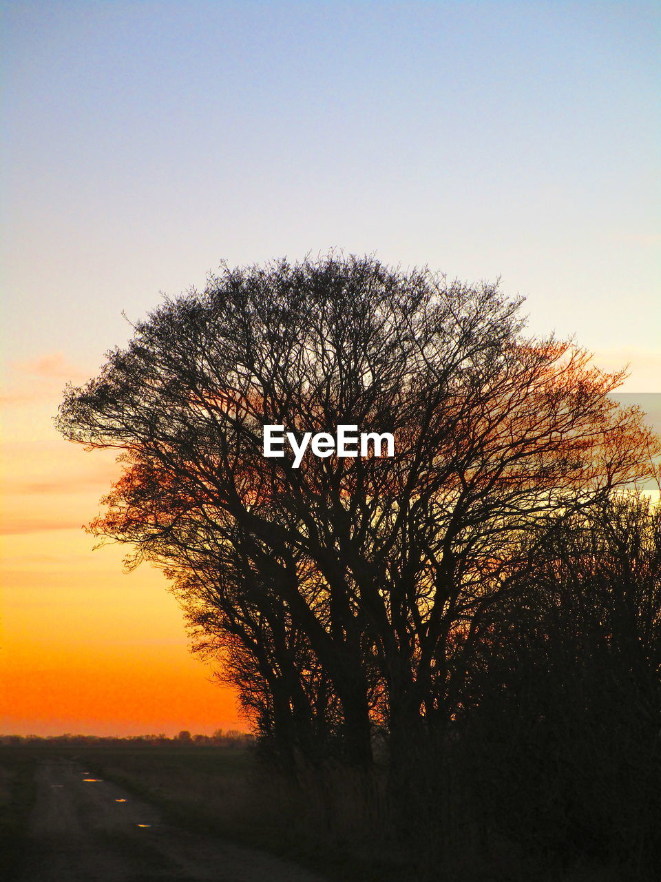 sky, sunset, tree, plant, silhouette, orange color, beauty in nature, tranquil scene, scenics - nature, tranquility, no people, nature, bare tree, non-urban scene, environment, landscape, clear sky, outdoors, growth, idyllic, isolated