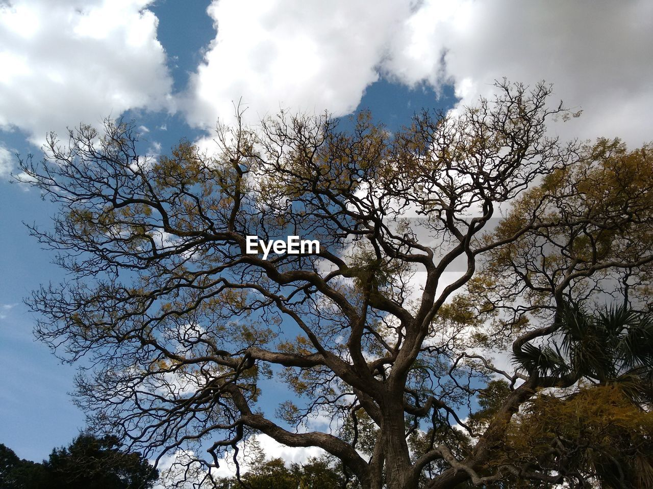 tree, sky, low angle view, cloud - sky, nature, growth, day, no people, beauty in nature, branch, outdoors