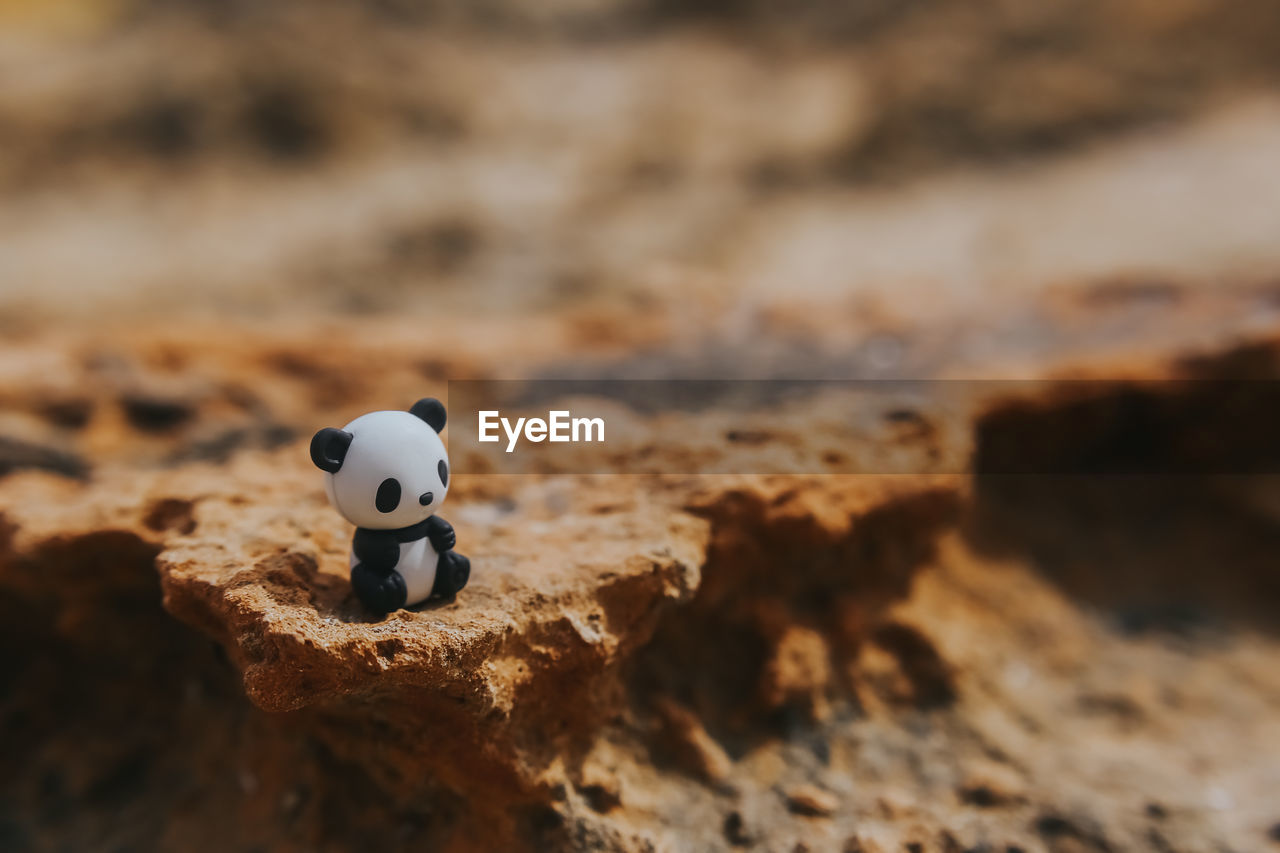 High Angle View Of Toy Panda On Sand At Desert
