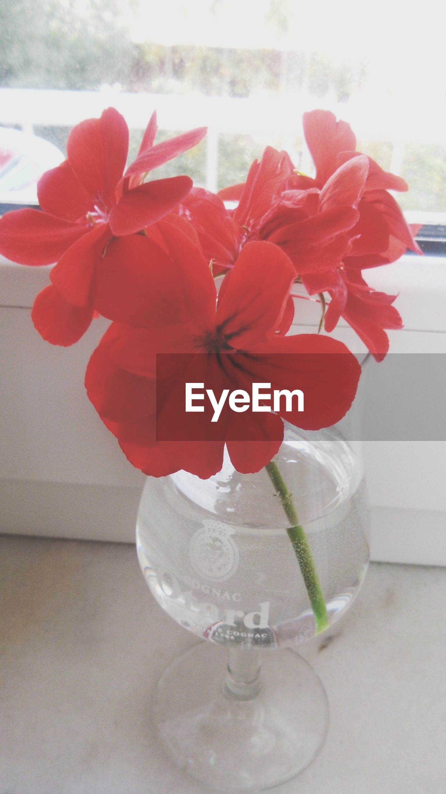 flower, freshness, fragility, petal, vase, flower head, indoors, glass - material, close-up, red, beauty in nature, table, transparent, nature, plant, growth, focus on foreground, water, blooming, pink color
