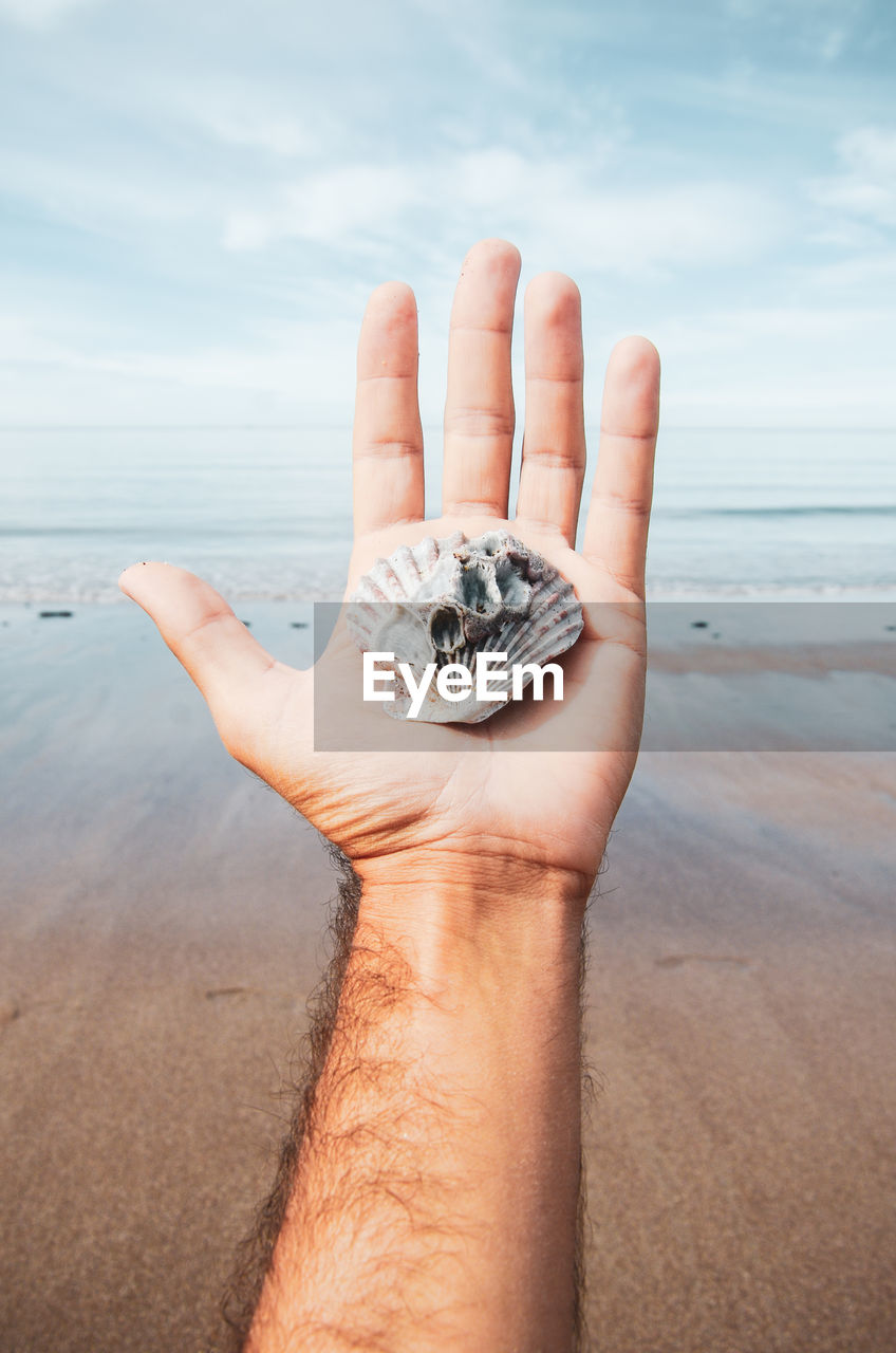 human hand, sea, hand, land, water, animal wildlife, sky, human body part, beach, nature, one person, animal, holding, real people, animal themes, animals in the wild, unrecognizable person, day, sand, horizon over water, body part, outdoors, finger