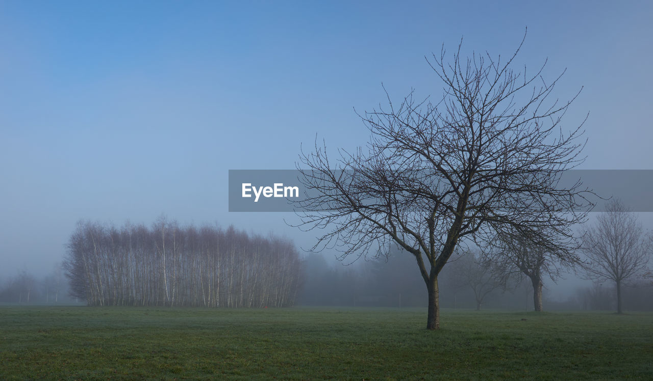 Bare Trees On Green Field During Foggy Weather