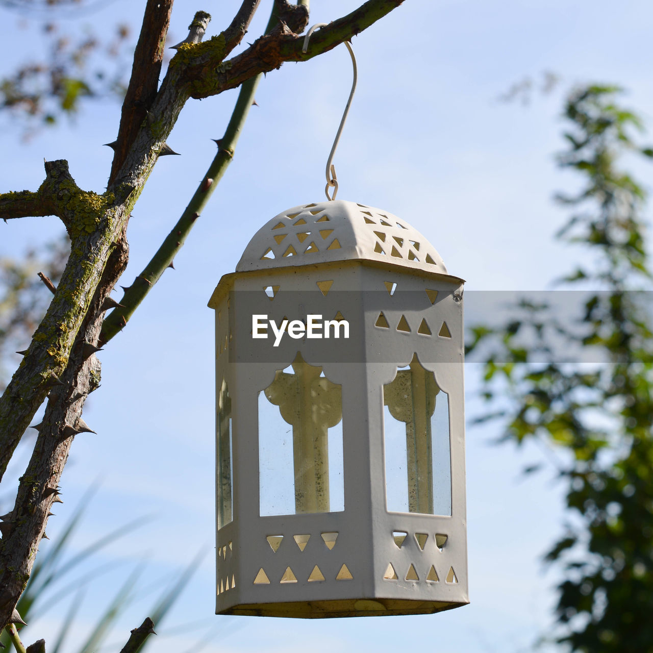 Low angle view of lantern hanging on tree