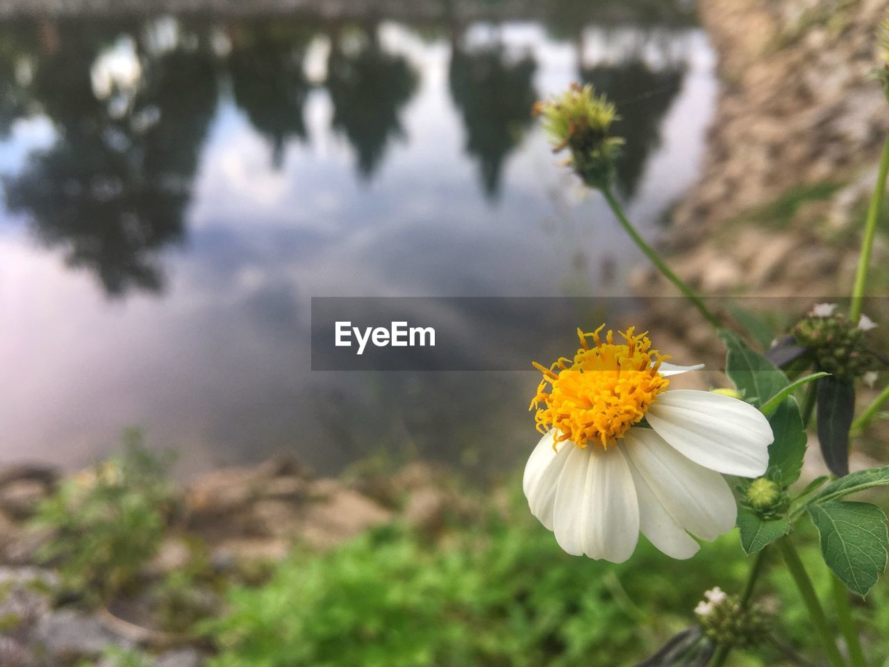 flowering plant, plant, flower, freshness, vulnerability, growth, beauty in nature, fragility, petal, nature, close-up, flower head, inflorescence, day, focus on foreground, no people, white color, pollen, outdoors, yellow