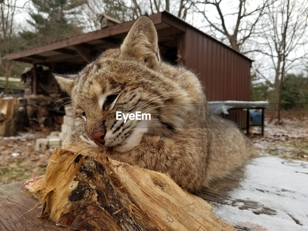 mammal, animal, domestic, feline, domestic animals, animal themes, cat, one animal, pets, domestic cat, vertebrate, wood - material, relaxation, no people, cold temperature, focus on foreground, eyes closed, day, winter, nature, whisker