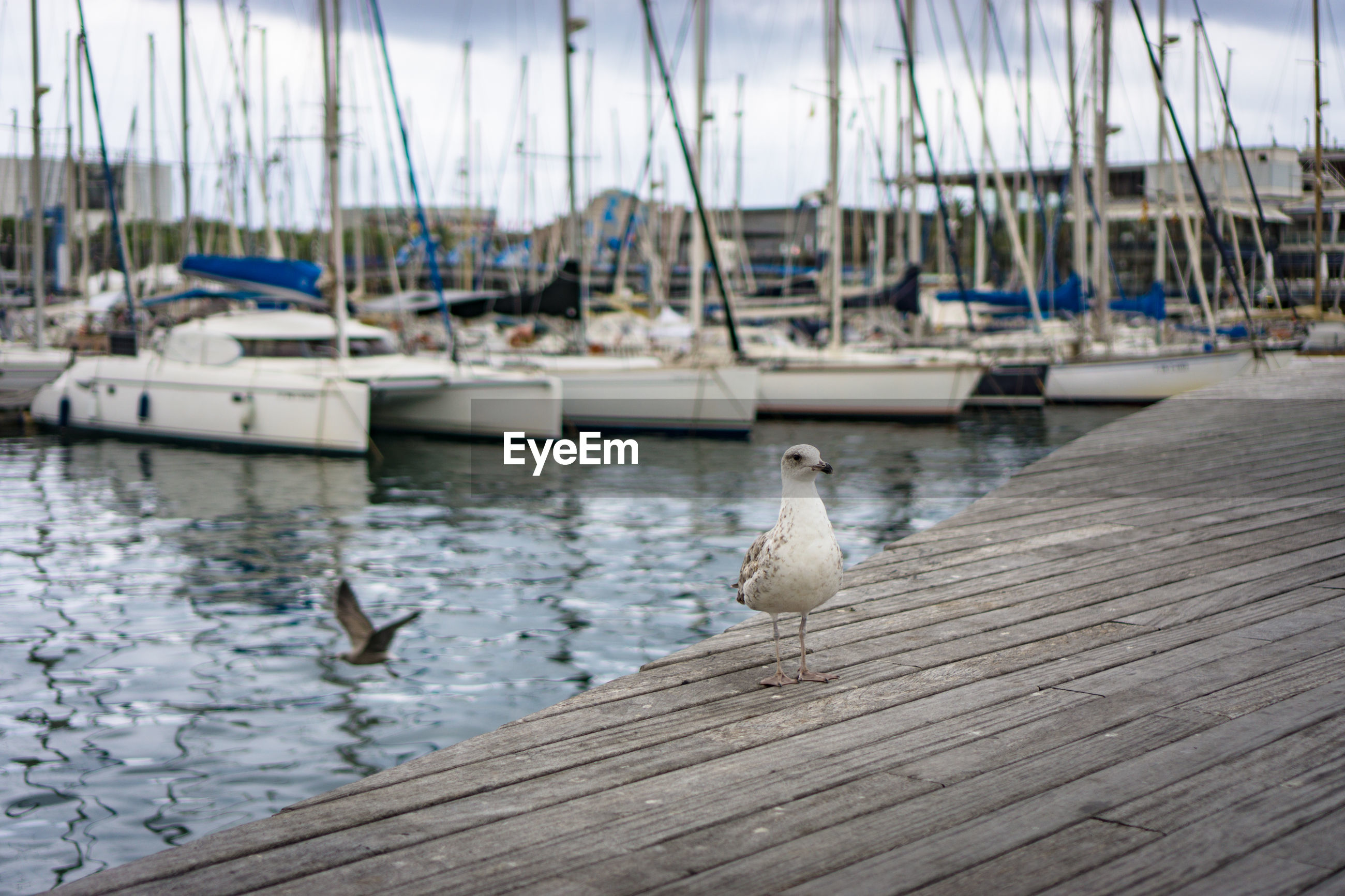 View of birds perching on wood at harbor