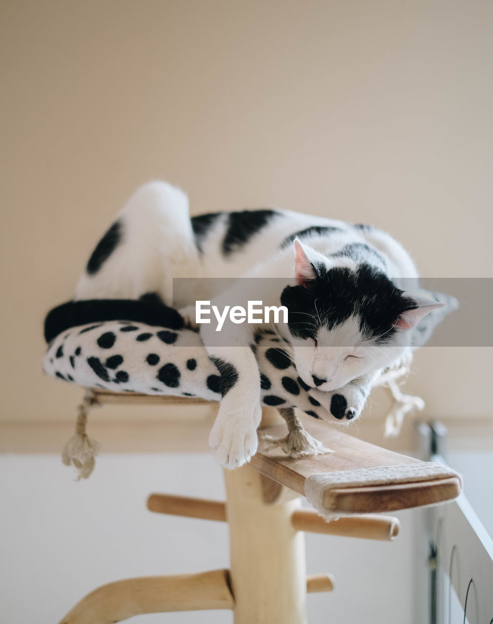 Close-up of a cat sleeping on a cat tree
