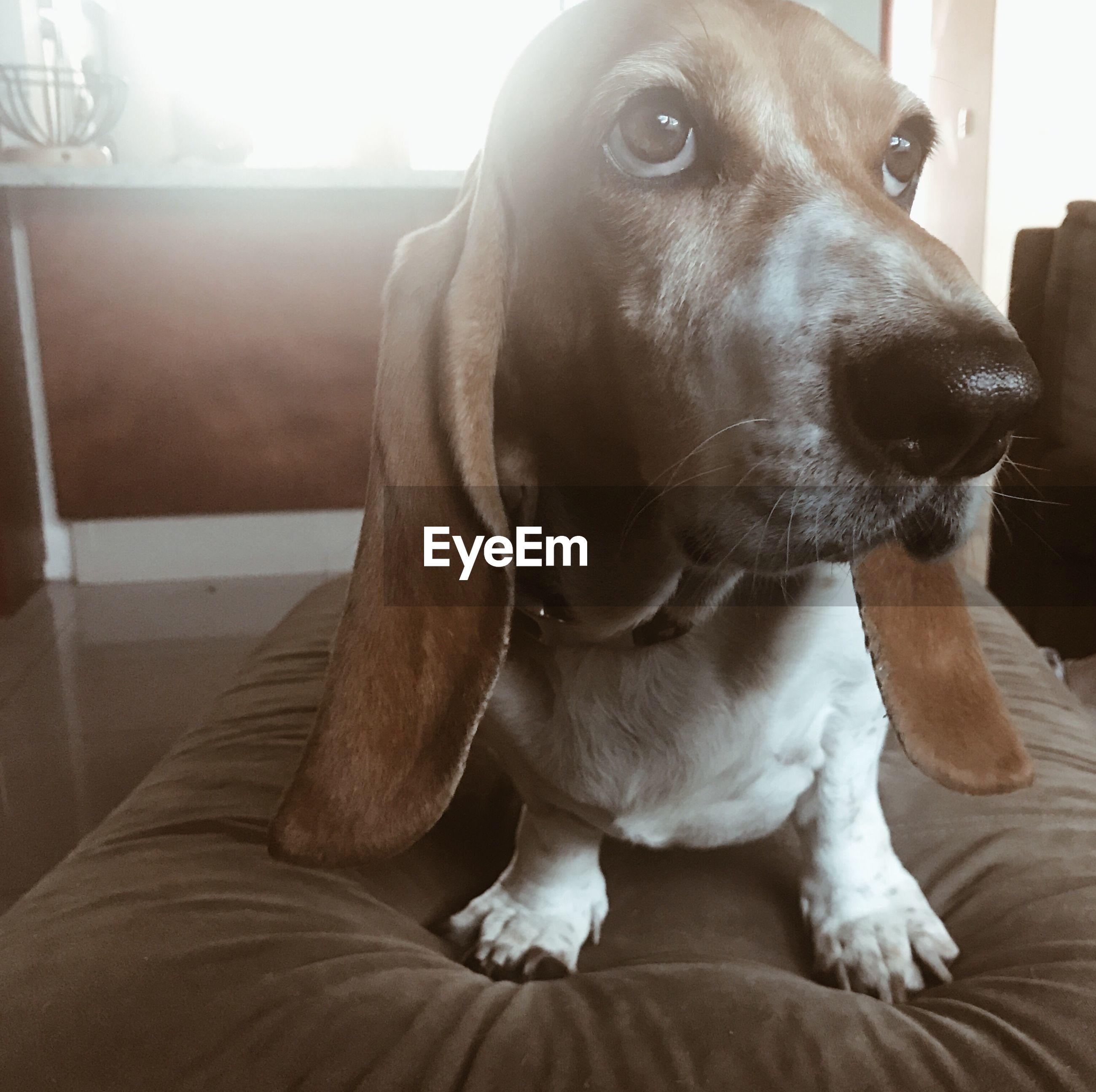Close-up of dog sitting at home